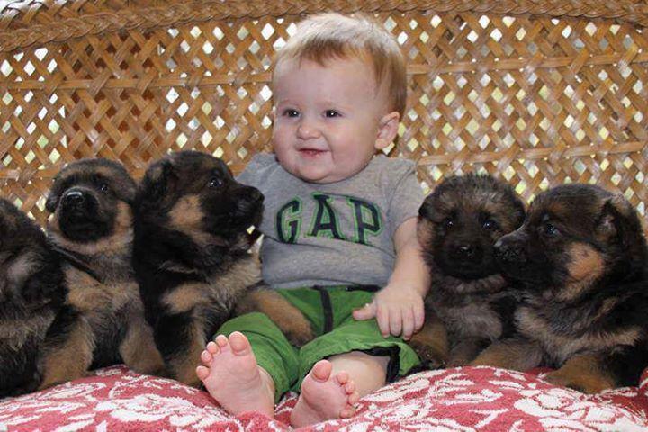Fofuras!!!Germanshepherd, Dogs, Best Friends, Pictures Of Baby, Pets, So Happy, German Shepherd Puppies, New Friends, Little Baby