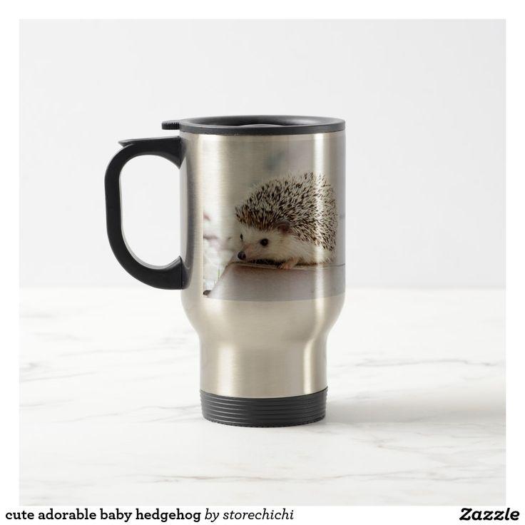 cute adorable baby hedgehog