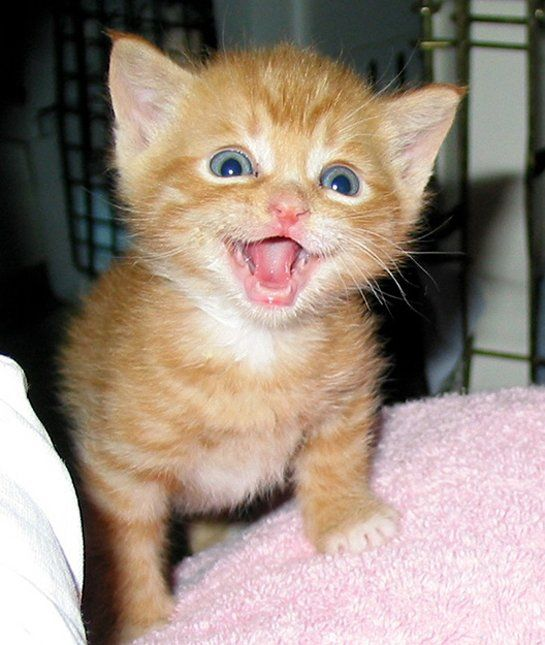 Hi! Hi! Hi!        12 Cats With the Biggest Smiles  Their happiness is evident