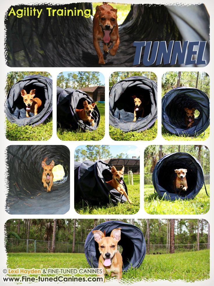 Dog Agility Training Naples Florida