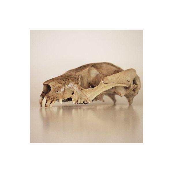 The Ridou Report: Possum Skull