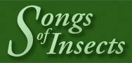 Songs of Insects - hear recordings of common insects