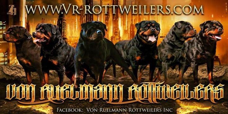 Von Ruelmann Rottweilers inc - German Rottweiler Puppies For Sale, German Rottweiler Breeder, Purebred Rottweiler Puppies For Sale : Other