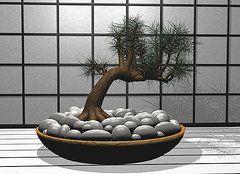 Jeff Steele - Bonsai Home