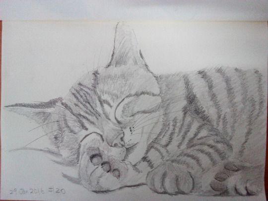 Cat sketching practice #020