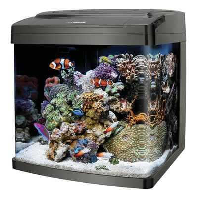 25 best ideas about 29 gallon aquarium on pinterest for Saltwater fish tank kit