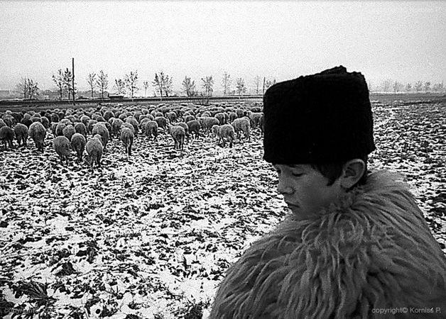Shepherd boy I. (1975), Korniss Péter