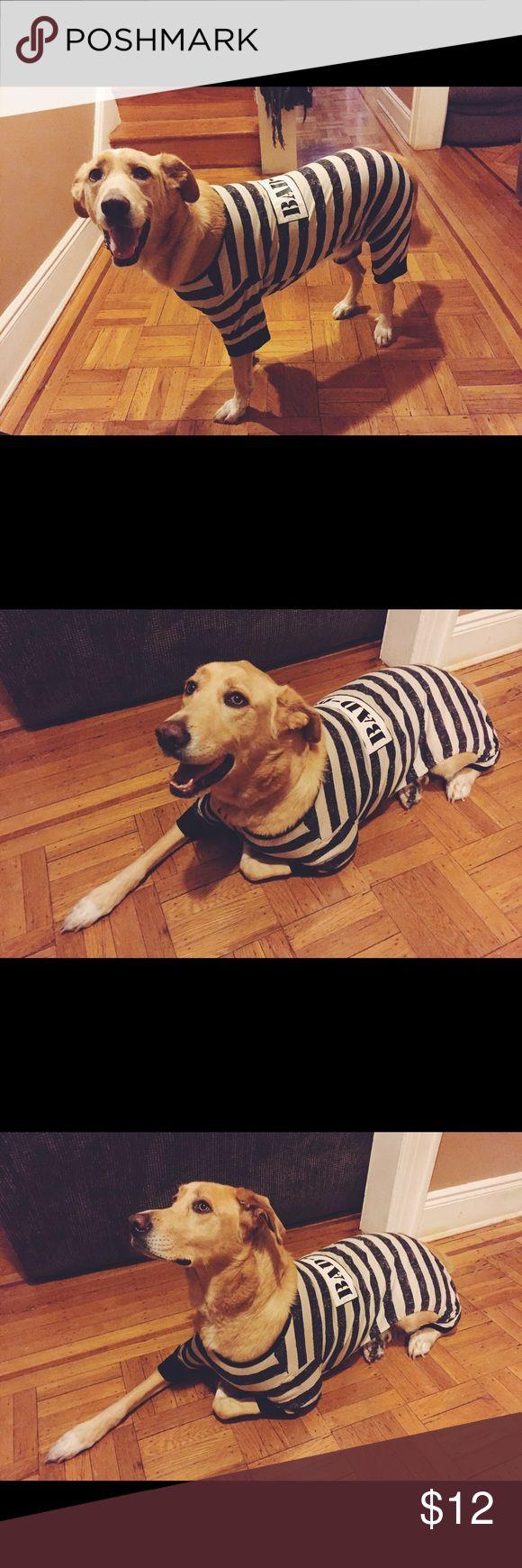 bad dog jail large dog costume