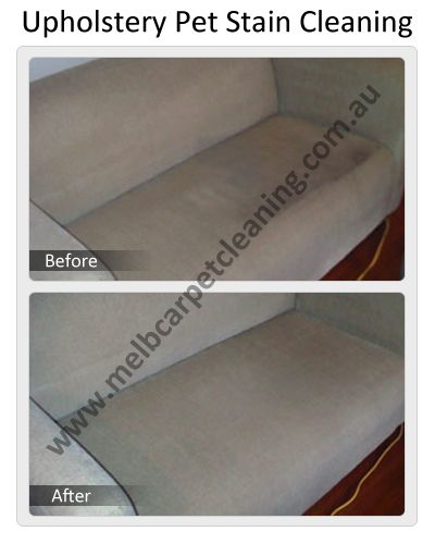 Upholstery Pet Stain Cleaning by Melbourne Carpet Cleaning