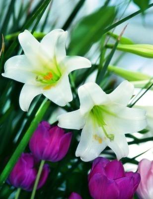 Easter Lily juga dapat memberikan sentuhan cantik pada dekorasi rumah saat Paskah