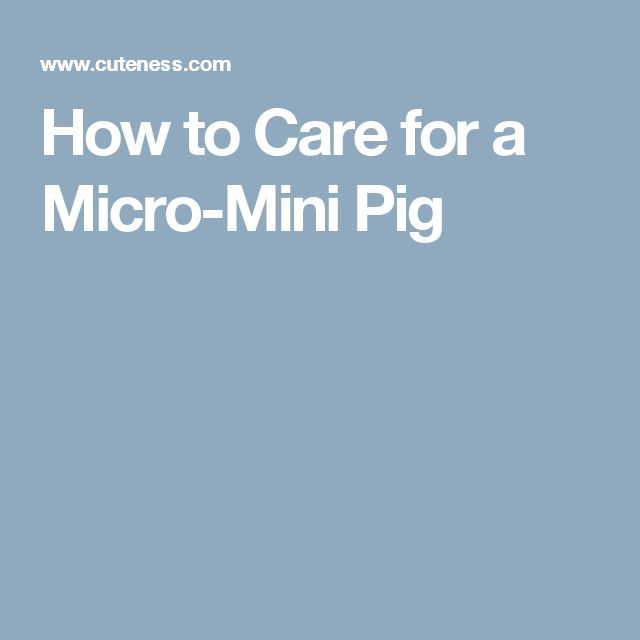 How to Care for a Micro-Mini Pig