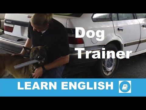 Learn English - Listening Test: Dog Training - E-ANGOL