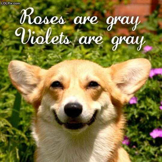 The smile makes this better: Rose, Dogs Poems, Color, The Faces, Smile Dogs, Valentines Day, Dogs Humor, Poor Dogs, So Funny