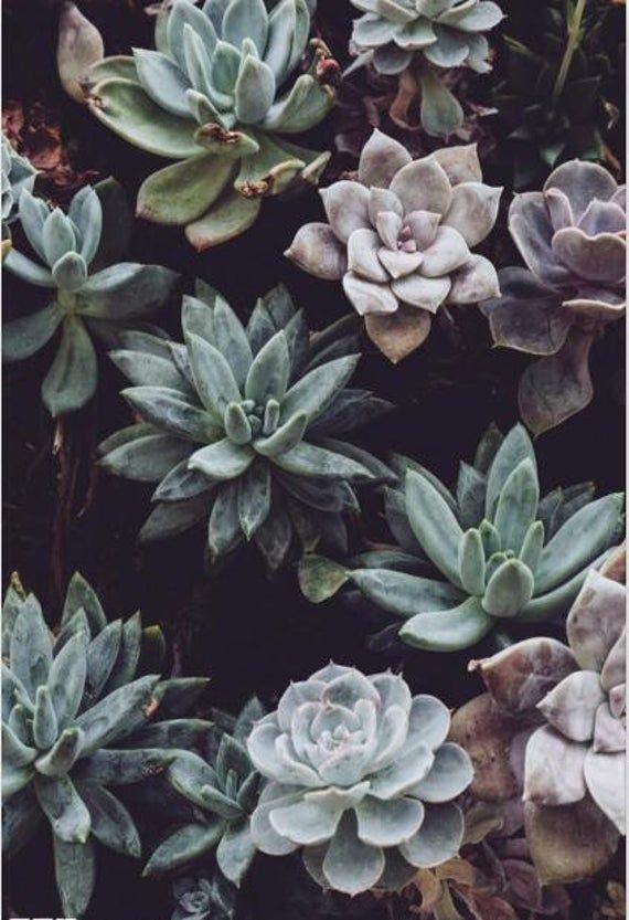 Handpainted Tropical Plants Succulent Plants Wallpaper, Dark Brown Background Green Succulent Plants