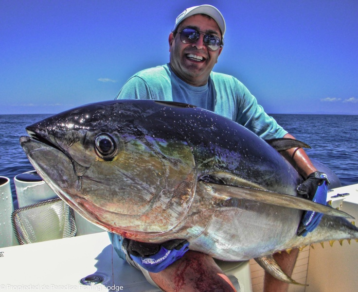 Propiedad de paradise panama sport fishing lodge for Panama sport fishing