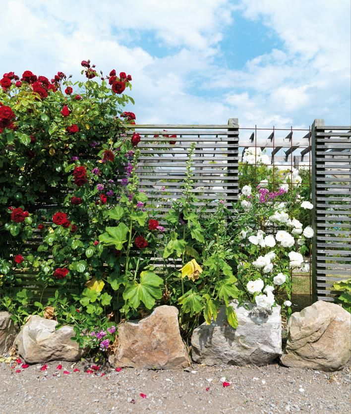 Liggande ribbor kan användas på många ställen där man vill ha en elegant skärmeffekt. Att bryta av med rufft armeringsjärn ger extra spänning bakom de klängande blommorna.