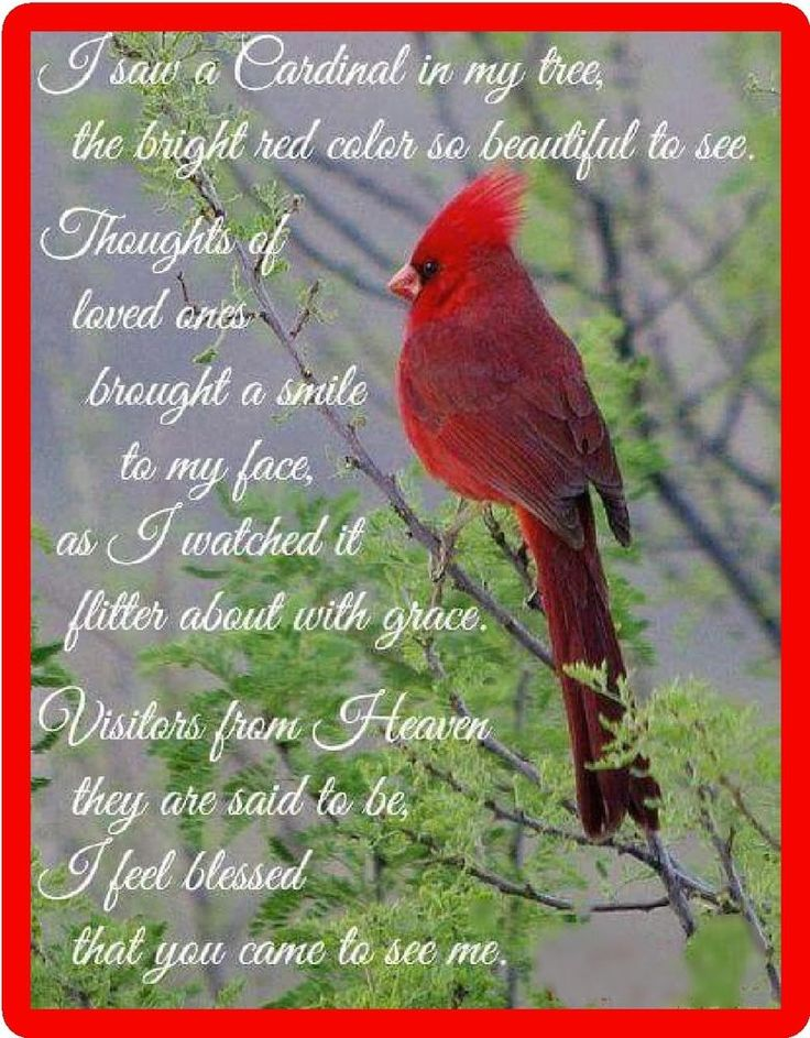 Details about insprirational red cardinal blessed bird