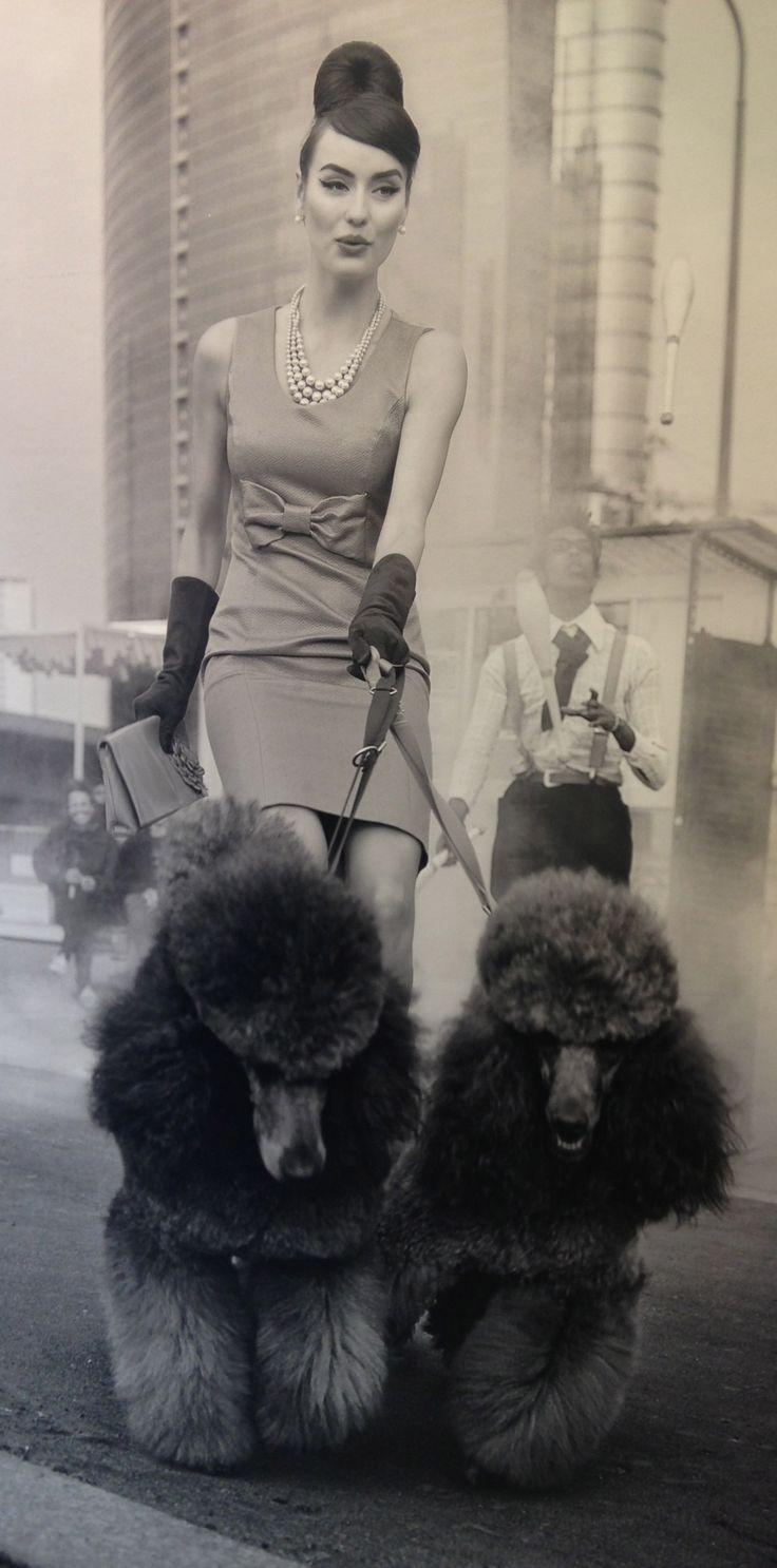 Fashionable woman walking Italian poodles.