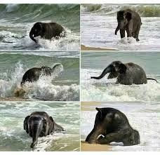 bebek filler ile ilgili görsel sonucu