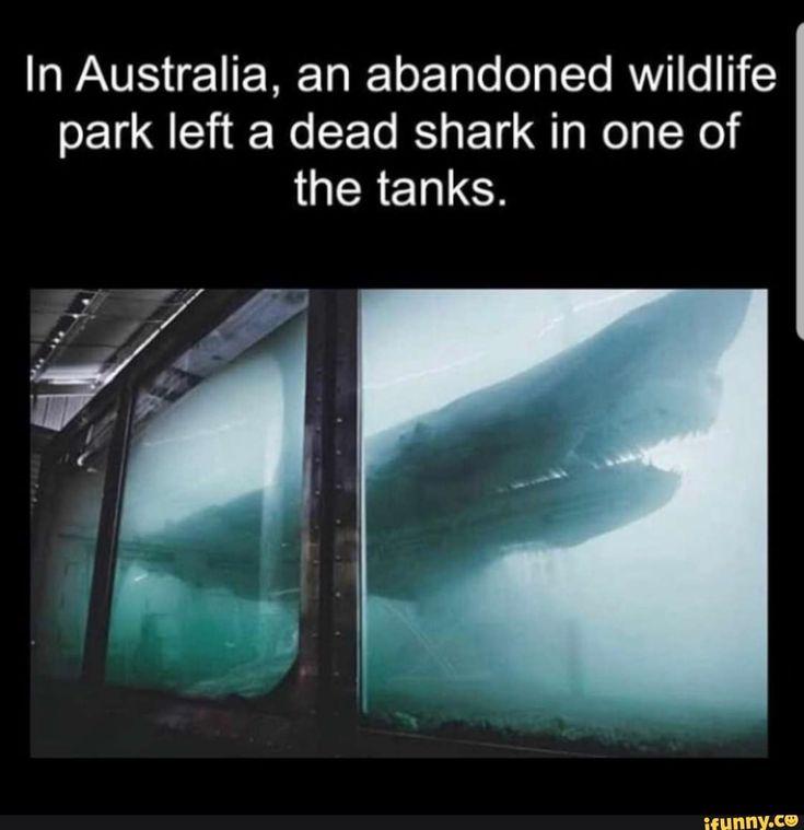 In Australia, An Abandoned Wildlife Park Left A Dead Shark