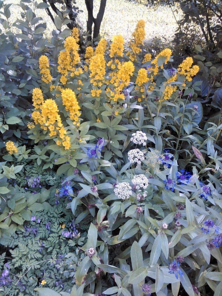 My friend's garden in Somero, Southern Finland,