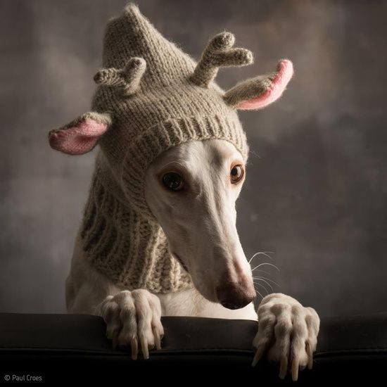 This would be a dangerous (but adorable) hat to wear around here with all the hunters...and the fact that greyhounds kind of already look like deer!