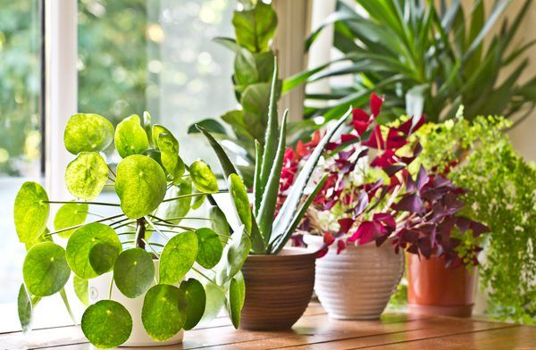 How Much Epsom Salt To 1 Gallon Of Water For Plants Plants