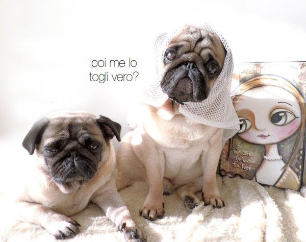rugo is my pug and he's murried with Tita her girlfriend. Near there is my light art work