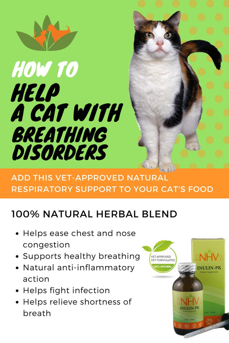 Natural Remedy For Upper Respiratory Infection In Dogs