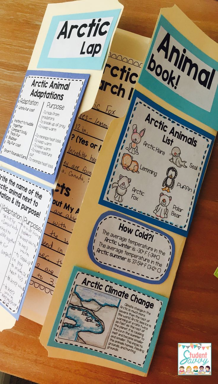 Arctic Animals Lapbook! -  Students design a creative lapbook all about Arctic animals!
