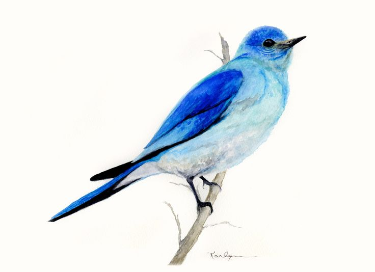 Mountain Blue Bird Archival Print of Original Watercolor 5x7 Aqua Blue Gray Home Office Decor Nature (12.00 USD) by KarlynnsArtfulGifts