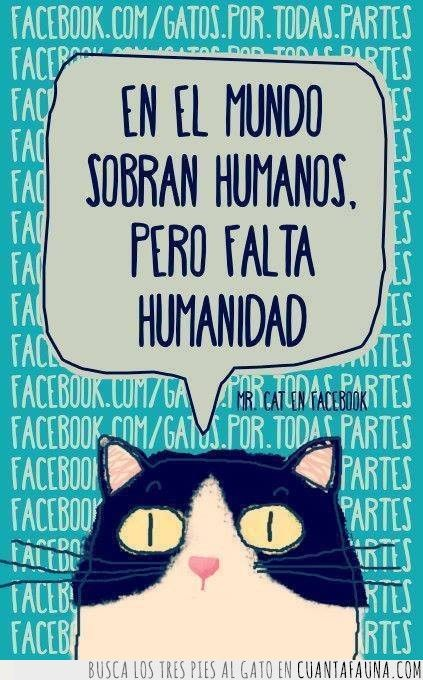 34014 - Las frases de Mr. Cat (In the world there are human beings, but humanity lacks)