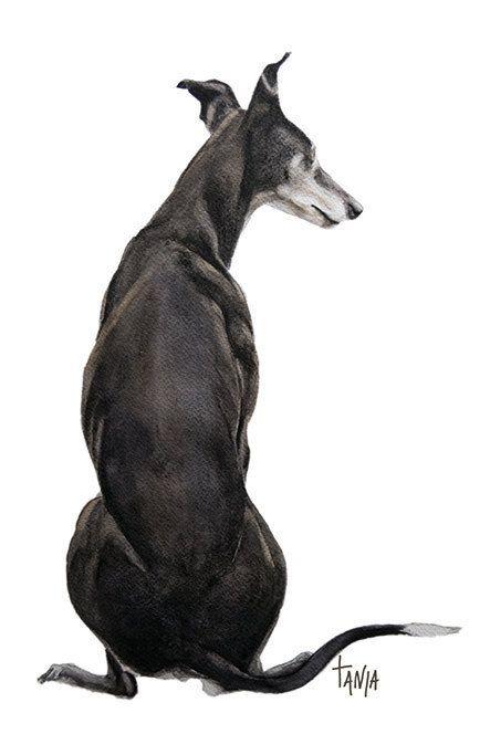 Me & My Shadow, Greyhound Galgo Windhond Whippet Dog Art print  hondenportret dierenkunst afmeting 21x30cm door TanjaOnTheWall op Etsy