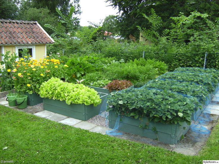 Tänk att odla jordgubbar i pallkragar... Trädgård i min och ryggens smak - absolut :D