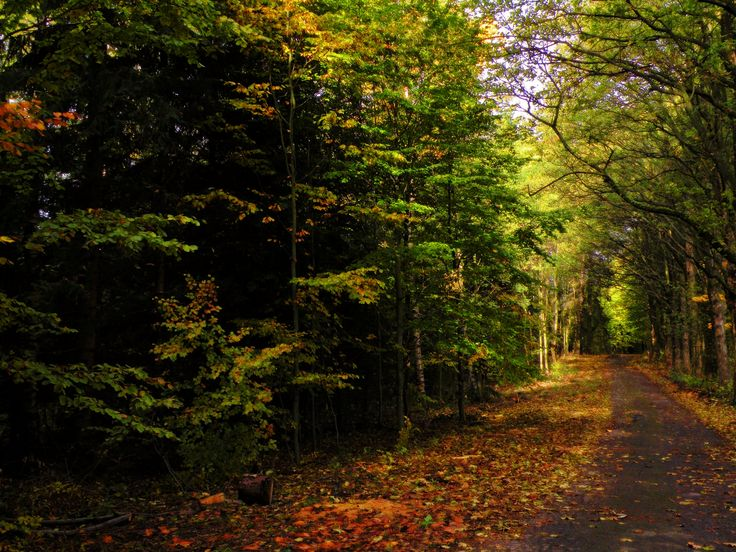 """Nine shots of autumn..."" photo no.1"