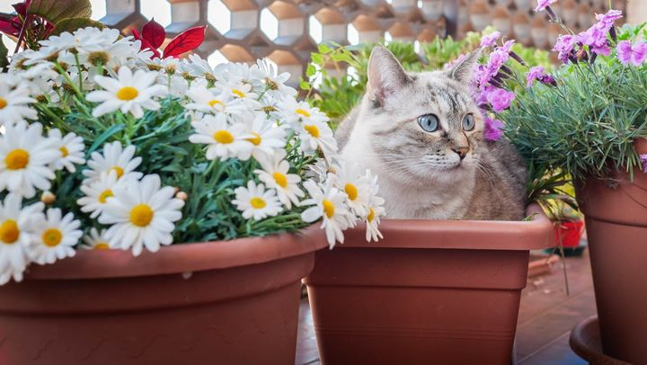 Ways to Keep Cats Out of Your Yard or Garden   Plants that ...