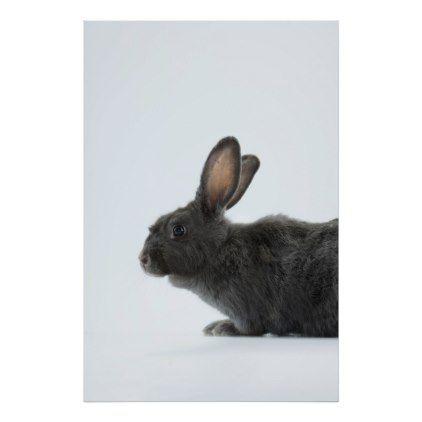 A Rare Silver Fox Heirloom Rabbit Poster - portrait gifts cyo diy personalize custom