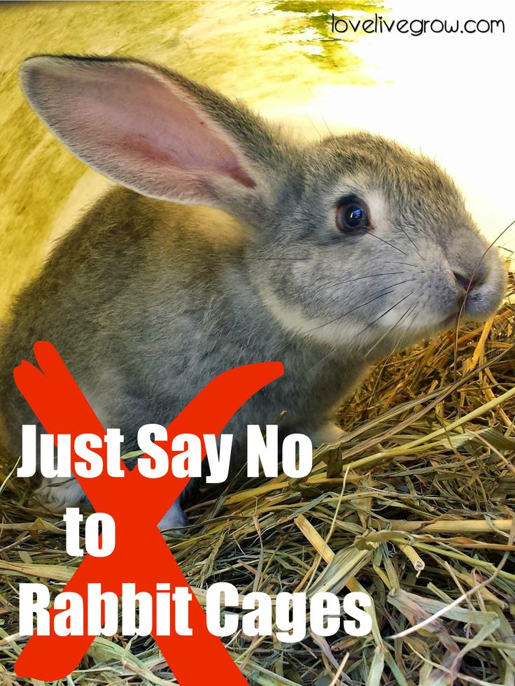 I know a better way to raise rabbits than sticking them alone in cages. Colony raising means letting your rabbits be rabbits.