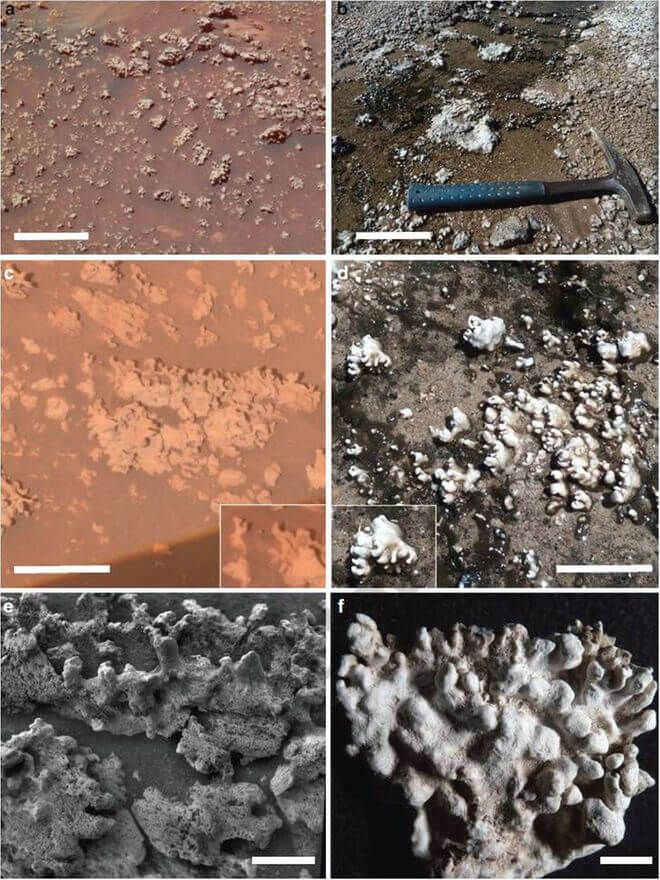 During its wheeled treks on the Red Planet, NASA's Spirit rover may have encountered a potential signature of past life on Mars