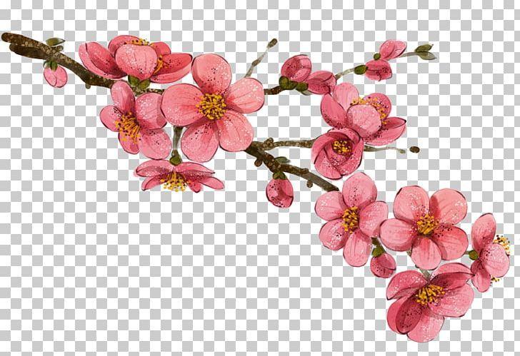 China Flower Drawing Illustration Png Art Blossom Botanical Illustration Branch Cherry Blossom Flower Drawing Drawings Botanical Illustration