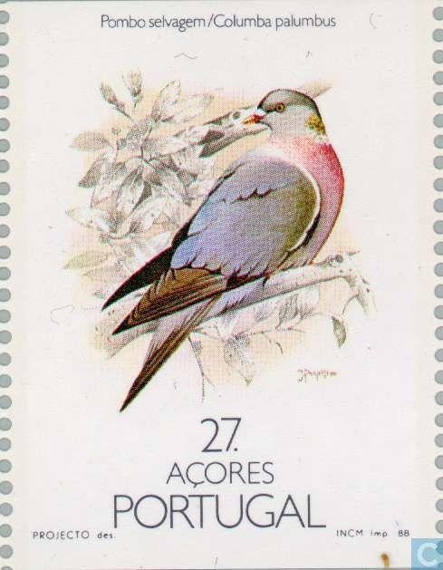 Portugal, Açores:  Columba palumbus - ( Pombo selvagem) 1988