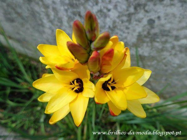 Brilhos da Moda: Flores, uma maravilha da natureza # 30