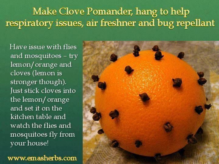 I read this recipe to get a lemon {works stronger} or an orange and poke holes in it with either a skewer or a pen and pop cloves into the holes, put in a central place in the home and the flies AND mosquitoes will disappear. It is also supposed to naturally deodorize the room as well.