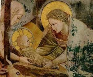 NATIVIDAD [Giotto di Bondone 1267-1377]