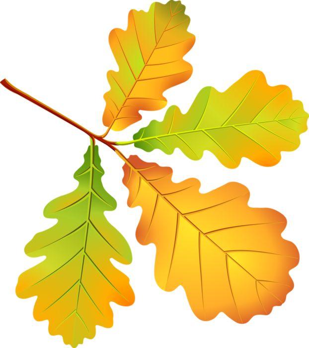 Картинки осенние листья для детского сада, смешные