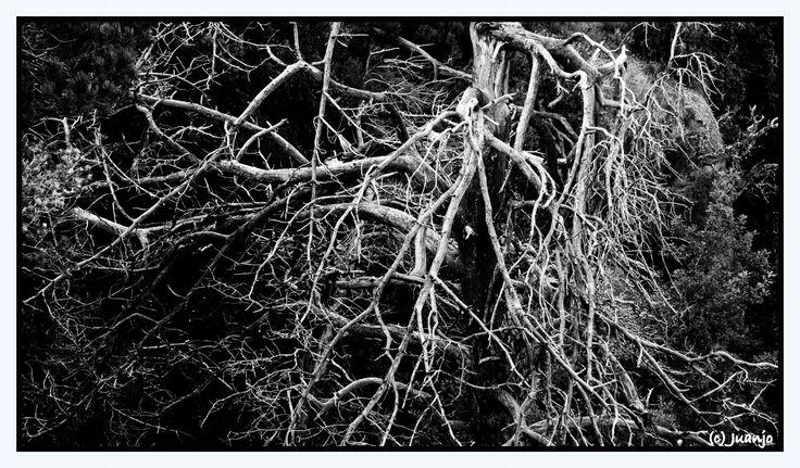 Naturaleza muerta by Juan Jose Hidalgo García on 500px