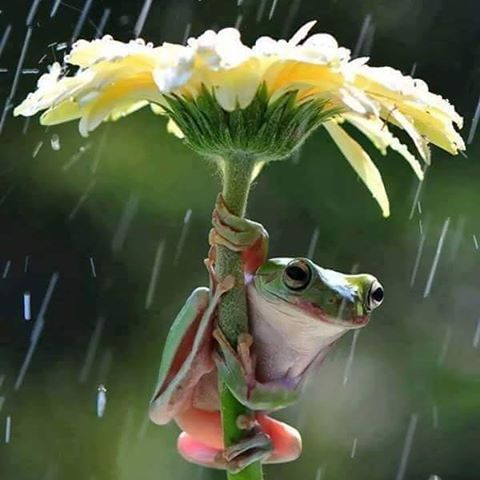 Clever Frog :-)