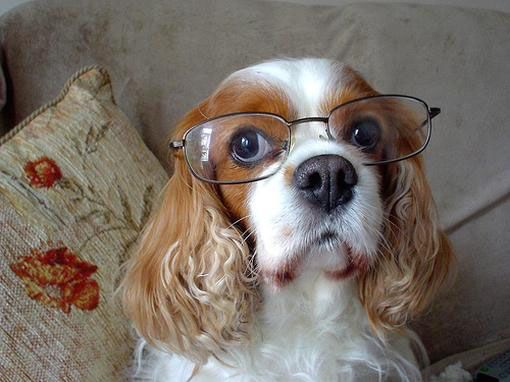 20 Photos Of Dogs Wearing Glasses Research Pinterest