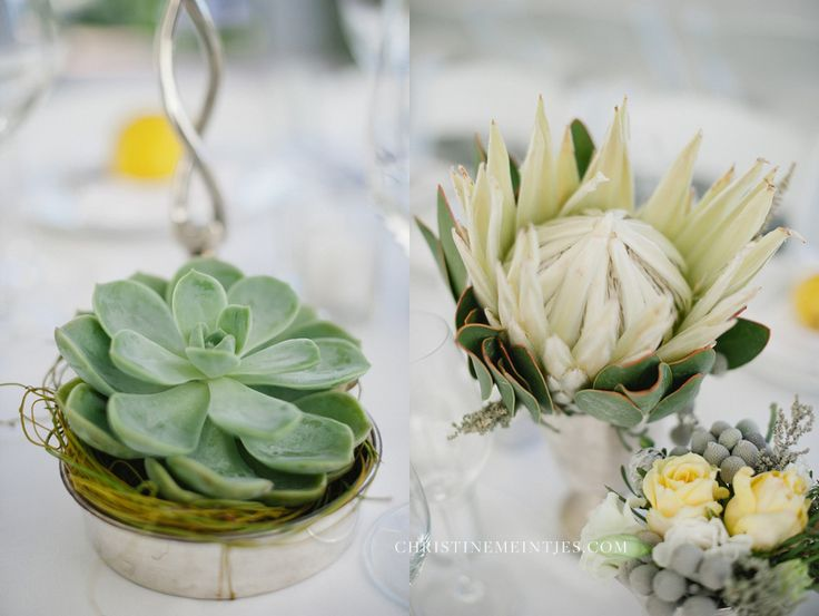 succulent & protea love  by @Christine Ballisty Meintjes
