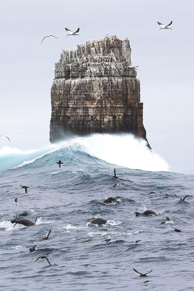 A feeding frenzy of seals and albatross at Eddistone Rock off Tasmania's rugged south coast. Photo by Andy Chisholm